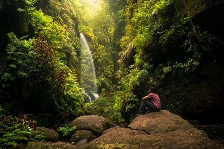 Waterfall, Los Tilos, forest, La Palma