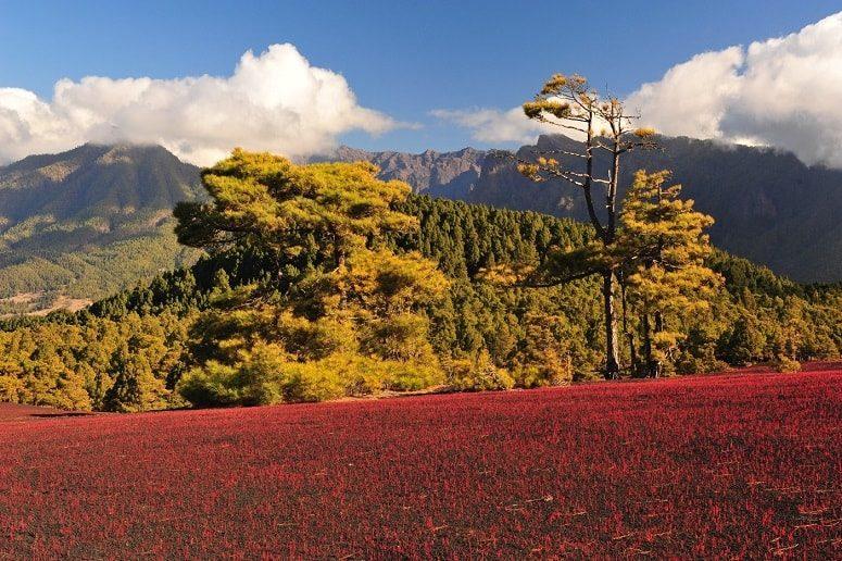 Blooming volcanic landscape, La Palma