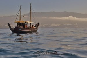 Boat Trip La Palma, view to the island