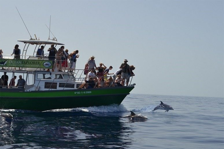 Boat Trip La Palma with Dolphins