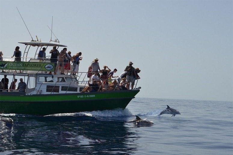 Bootsausflug La Palma mit Delfinbeobachtung