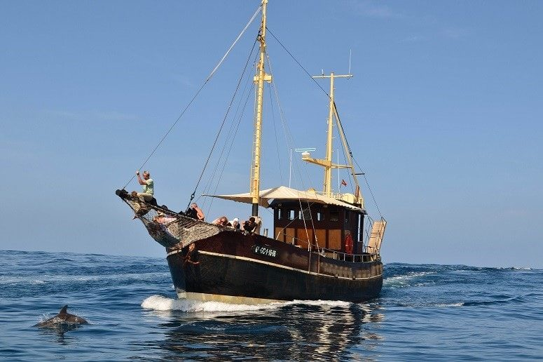 Excursiones en barco con avistamiento de ballenas y delfines