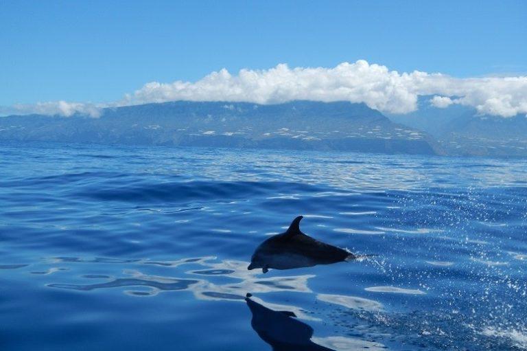 Delfin La Palma, excursiones en barco