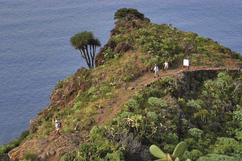 The green North, La Palma