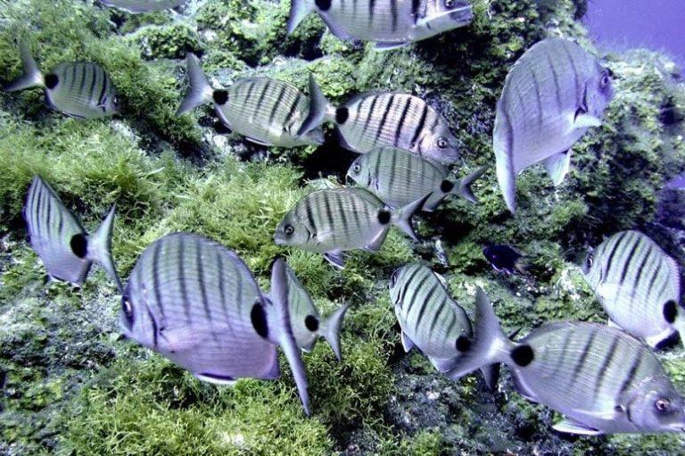 Korallen, Fische, La Palma