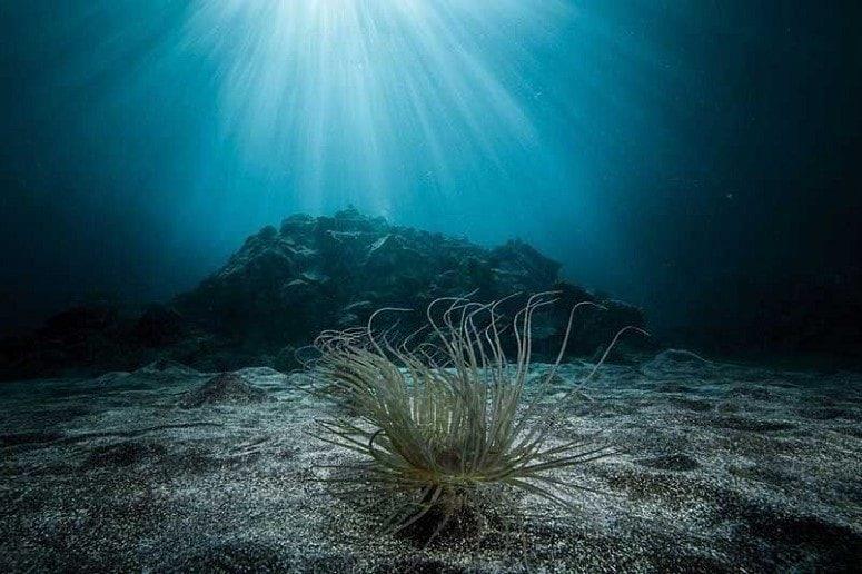 Seabed, La Palma