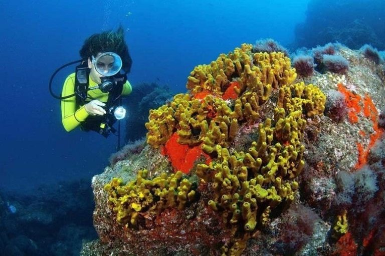 Taucher, Koralle, La Palma