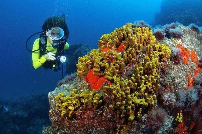 Diver, Corals, La Palma