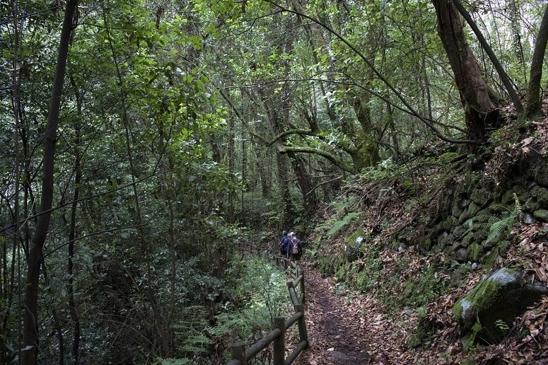Hiking in the laurel forest, La Palma