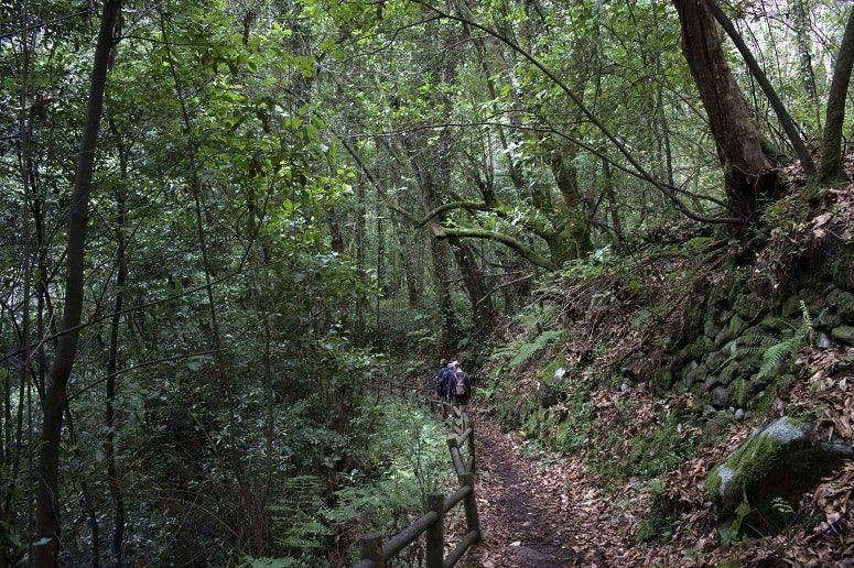 Wandern im Lorbeerwald, La Palma