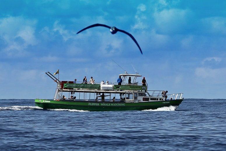 Avistamiento de ballenas y delfines La Palma