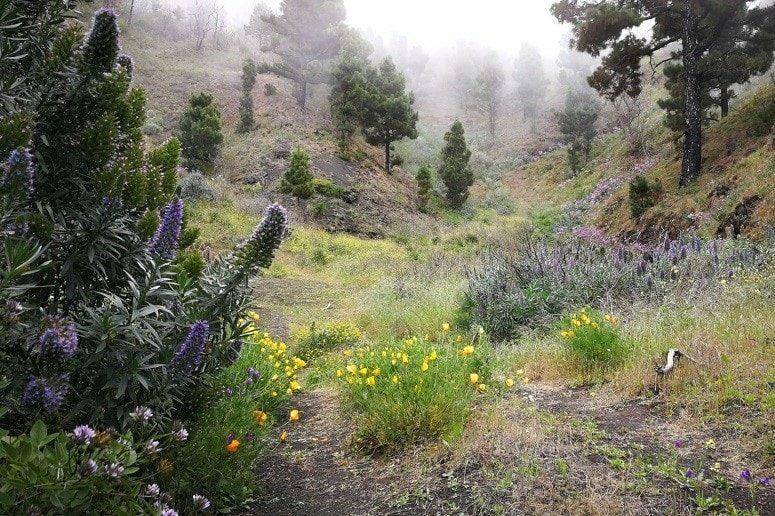 Nebelschwaden und Blütenpracht, La Palma