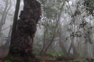 Nebelwald La Gomera, Wandern
