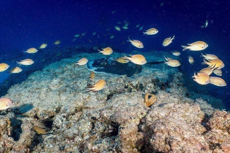 Diving Tenerife, Atlantic Ocean
