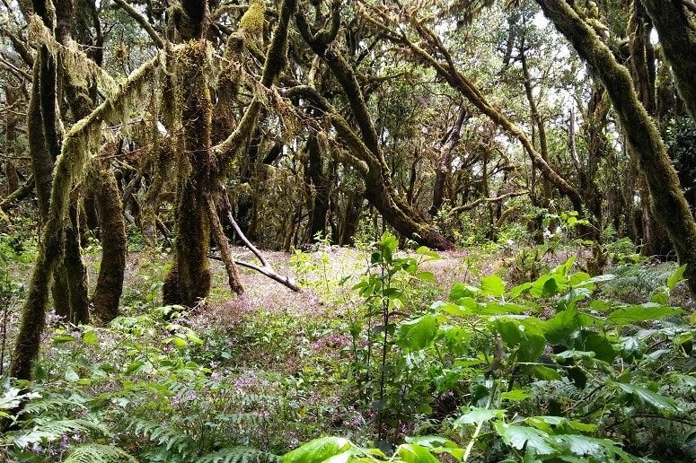 Wandern La Gomera, Nationalpark, Wald