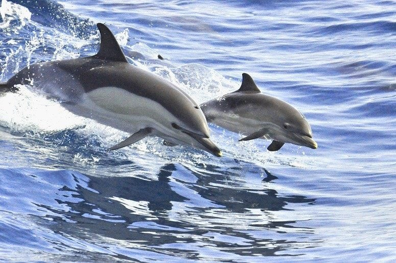 Dolphins, Boat Trip