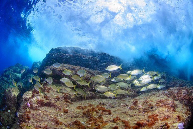 Fische, Teneriffa, Unterwasserwelt
