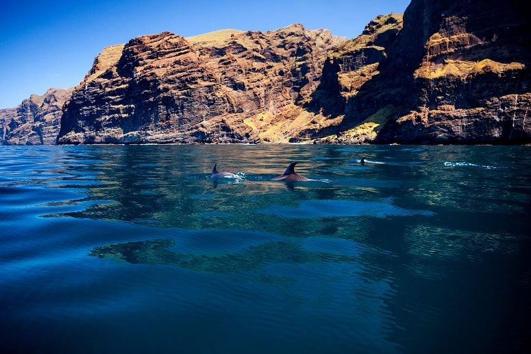 Los Gigantes, Teneriffa, Delfine