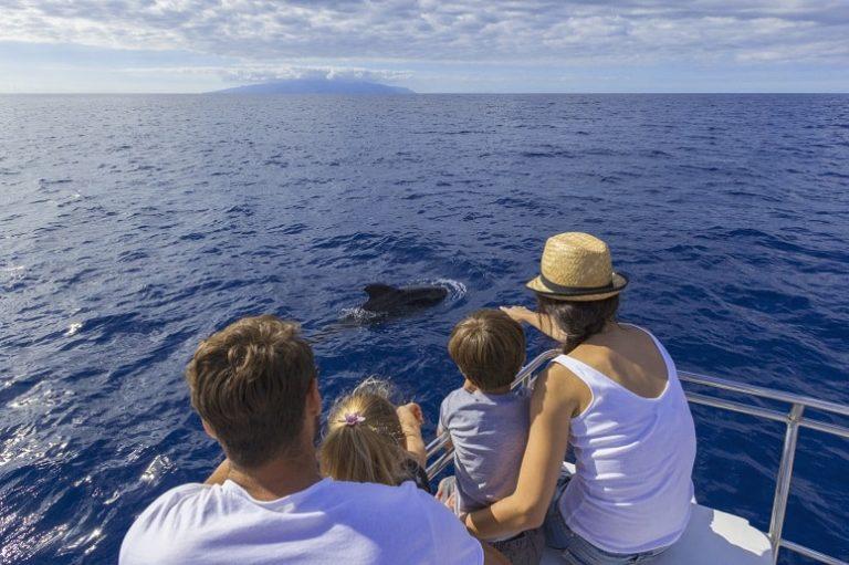 Südküste Teneriffa, Wale beobachten