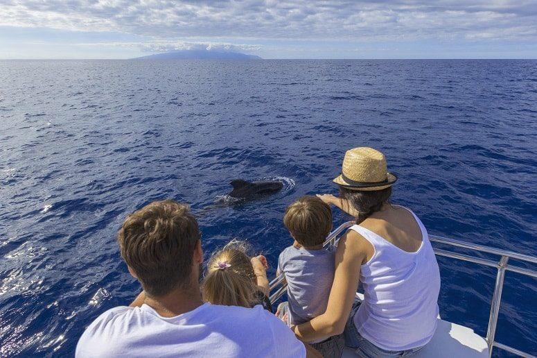 Southern Coast, Tenerife, Whale Watching