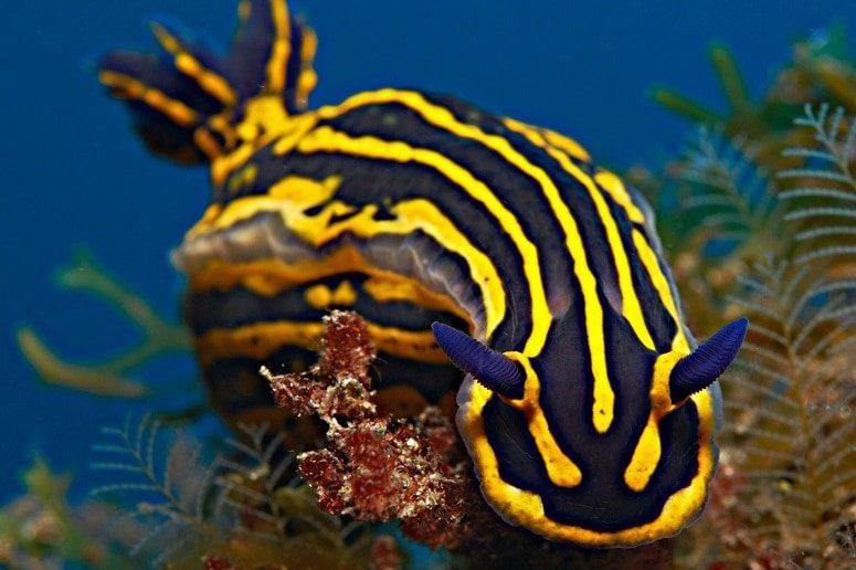 Unterwasserwelt Teneriffa, Tauchen