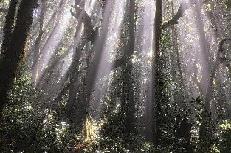 Wald, La Gomera, Sonne