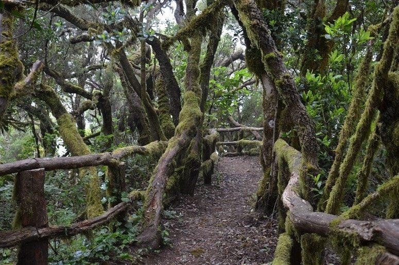 Waldweg La Gomera, Wandern