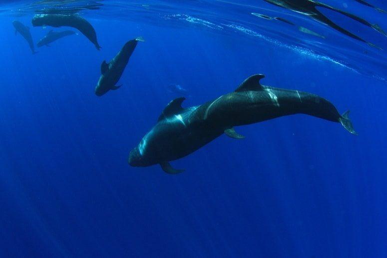 Wale, Teneriffa, Whale Watching