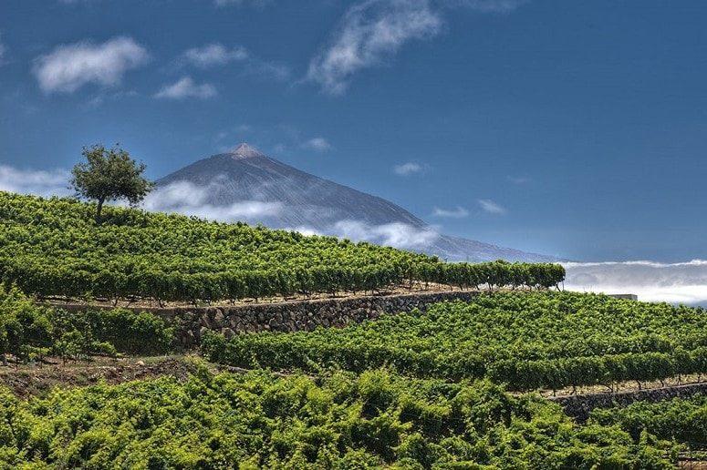 Ausblick von der Bodega, Teneriffa, Teide