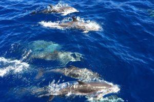 Delfine, La Gomera, Whale Watching