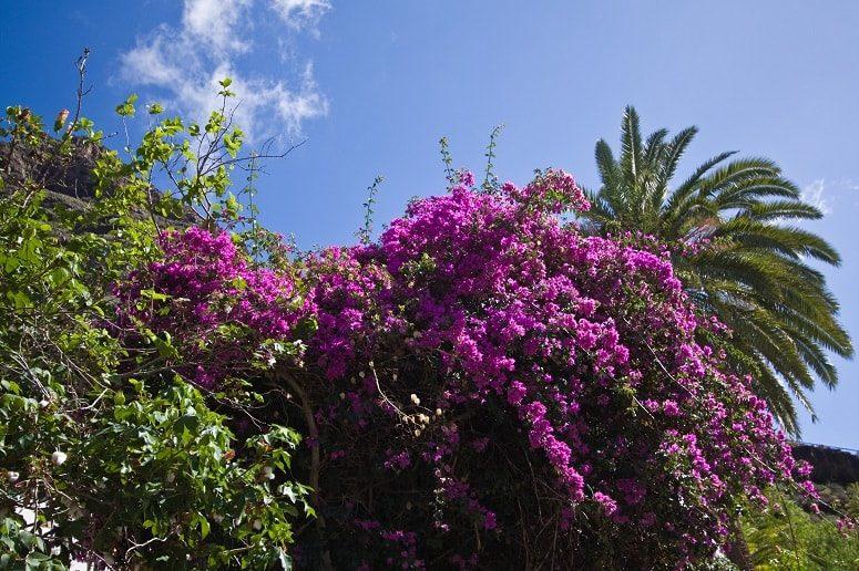 Fotosafari auf La Gomera