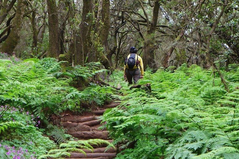 Enchanted Forest La Gomera, Hike