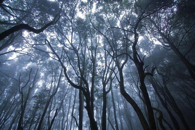 Wald La Gomera, mystisch