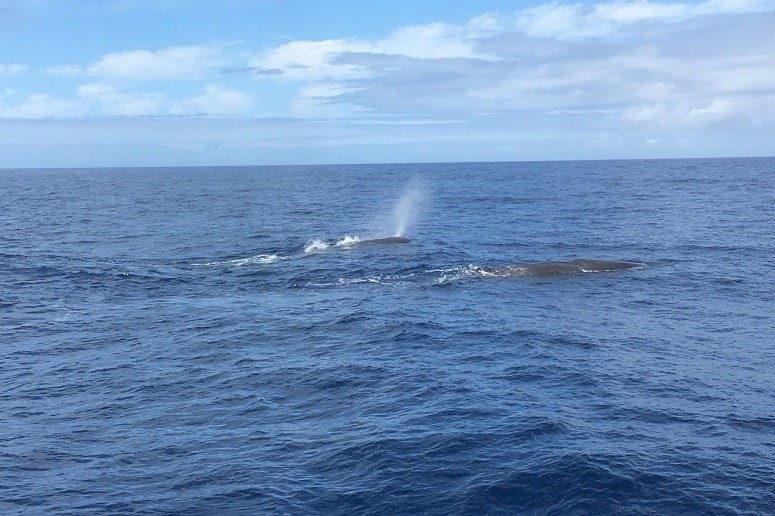 Whales La Gomera, Whale Watching