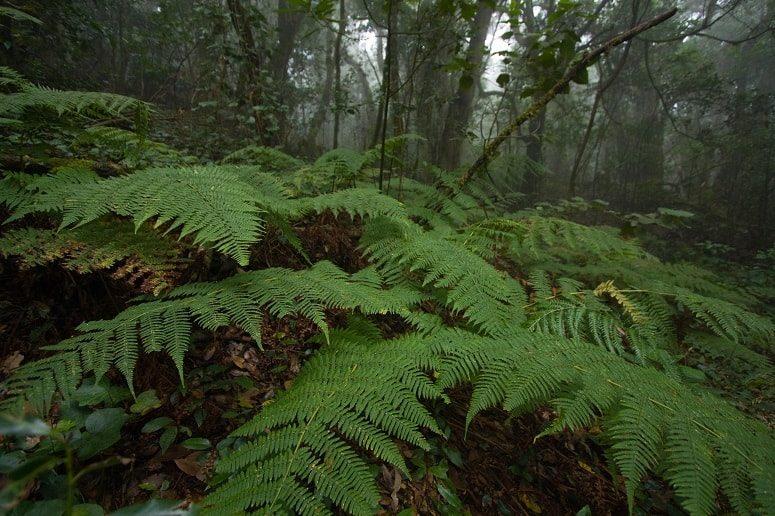 Wanderung Regenwald, La Gomera