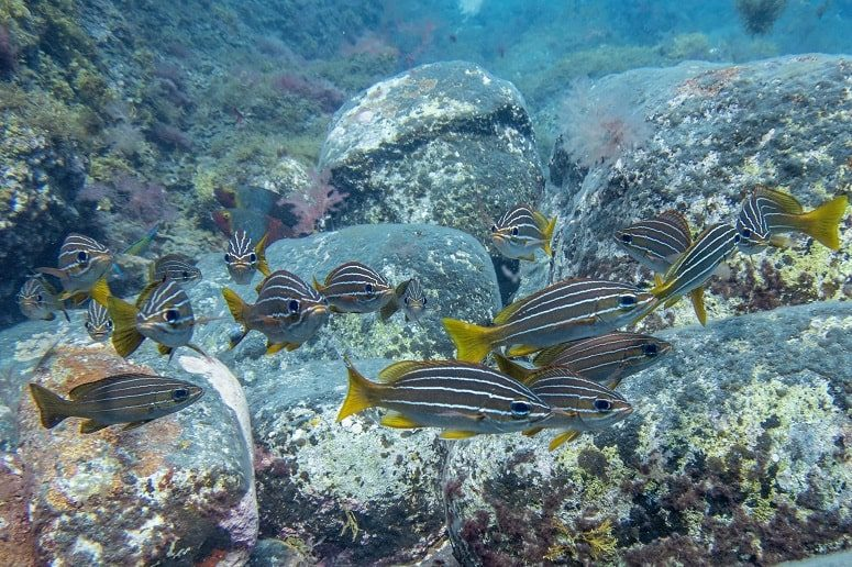 Underwater World, La Palma, Grunts