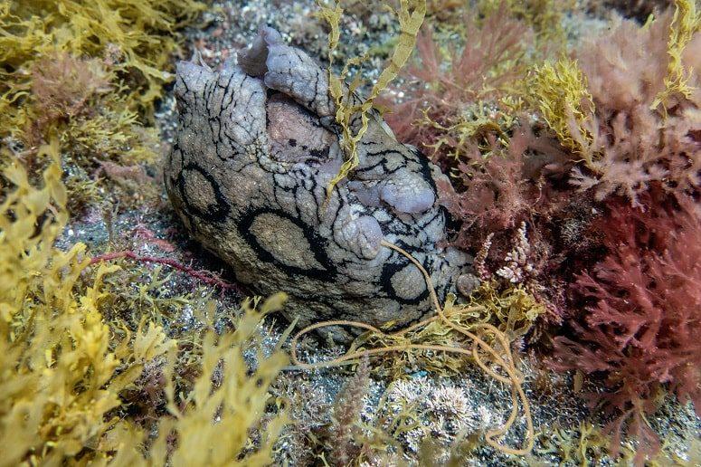 Underwater World, La Palma, Snorkelling