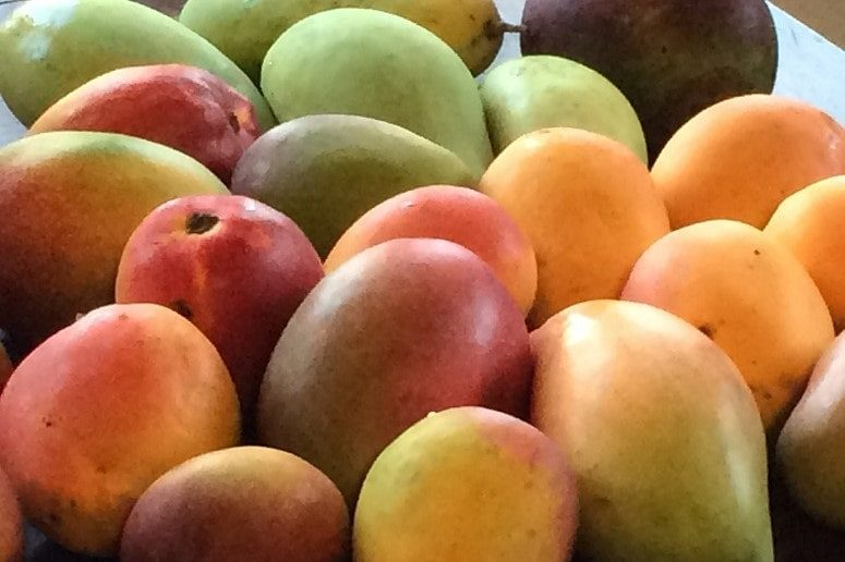 Mangos, Mangomania, La Palma